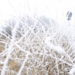 a big winter mess